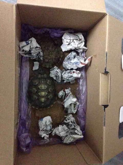 手工打造给小乌龟冬眠的房子