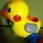 初见小黄鸭